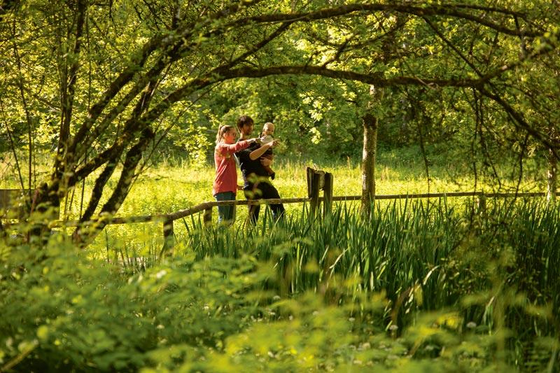 Picknicken am Bolligerweiher – Lebensraum vieler Pflanzen- und Vogelarten